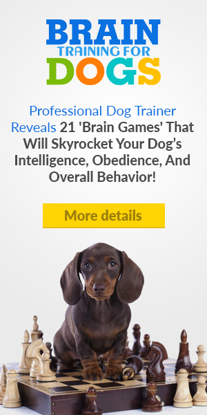 Brain Training for Dogs.